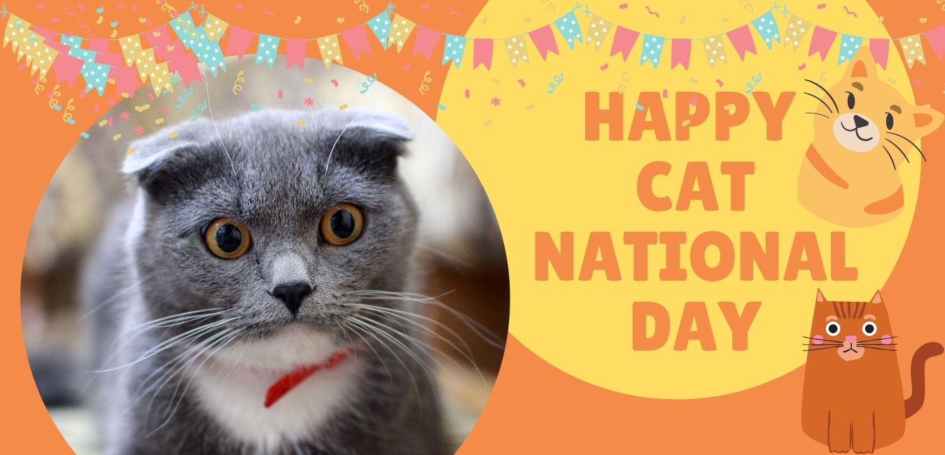 Happy National Cat Day 29th Oct
