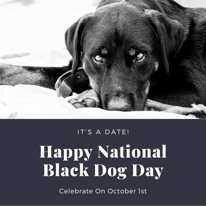 Adopt A Black Dog on National Black Dog Day
