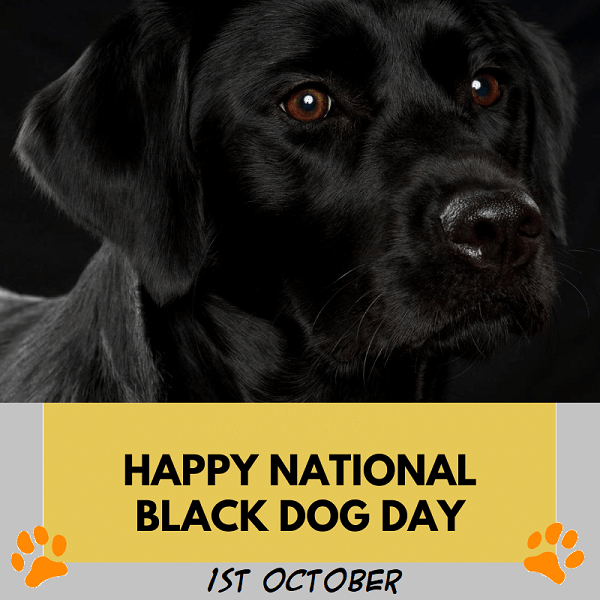 Celebrate Happy National Black Dog Day 2021